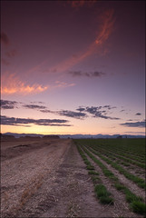 Whispy Clouds (Adam Nimmo) Tags: sunset field clouds nikon moonrise harvestmoon 35mmf18 18200vr d40x