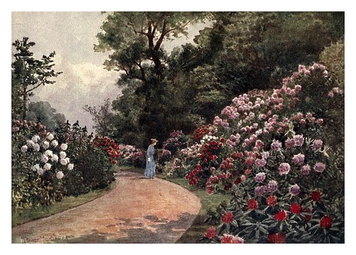 012-El paseo de los rododendros-Kew gardens 1908- Martin T. Mower