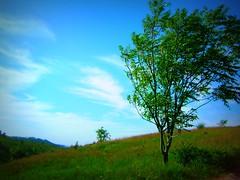 warm breeze (melissa_dawn) Tags: blue summer tree green warm kentucky ky sony summertime breeze pointshoot hazard picnik sonycybershot mountaintopremoval melissamiller melissadawn melissadawnmiller