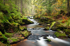Fairy Tale Forest (andywon) Tags: autumn trees fall nature water colors leaves forest river germany landscape stream schwarzwald blackforest hotzenwald badenwrttemberg westerneuropeanbroadleafforests gettyimagesgermanyq1