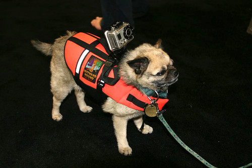 Interbike 2010 - GoPro dog