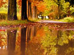herbst extrem (~janne) Tags: autumn trees reflection berlin water colors rain germany 50mm wasser herbst olympus schloss bäume spiegelung schlosspark regen janne charlottenburg farben wetzlar leitz janusz summiluxr e520 ziob
