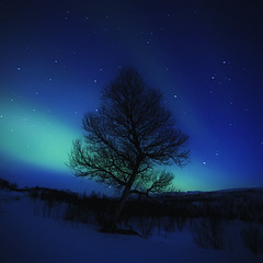 FROM MY SECOND AURORA SESSION [EXPLORE FRONTPAGE] (~~~johnny~~~) Tags: tree interesting silhouettes explore frontpage auroraborealis newvision johnnymyrenghenriksen peregrino27newvision