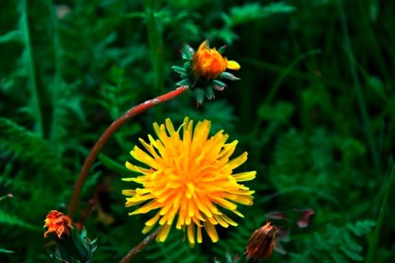 Jiuzhaigou flower14