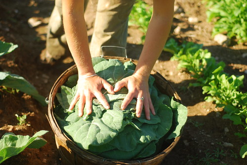 Tamping the collards