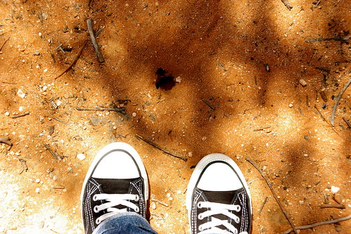 biggest ant hole in the world