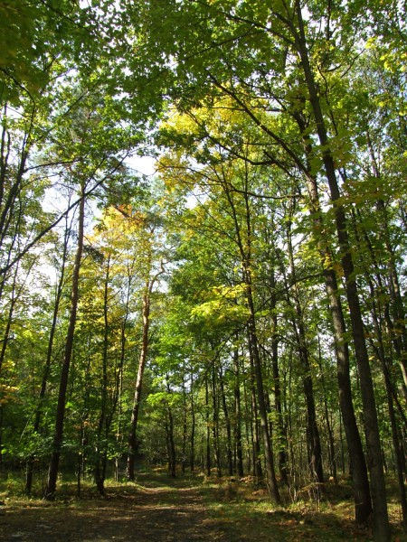 October forest 21