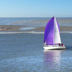Encountering Seals at a sandbank of Vlieland (Bn) Tags: holland waddenzee zeilen sailboat freedom v
