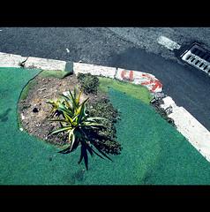 PAVIMENT's POND ISLAND (Elena Fedeli) Tags: street urban italy roma strada asfalto moquette paviment