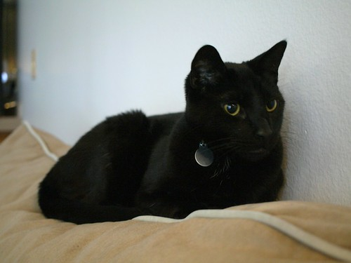 black cat couch toshio