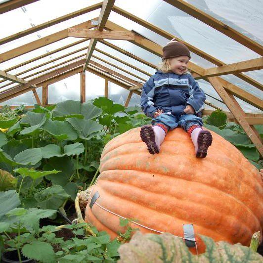 the biggest pumpkin I know