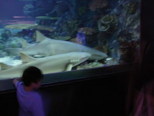 Ocean World - Shark tank