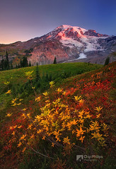 Fall Sunrise, Paradise, Mount Rainier (Chip Phillips) Tags: park blue autumn red snow mountains fall yellow sunrise washington paradise state pacific northwest mount national rainier cascade alpenglow huckleberry mywinners