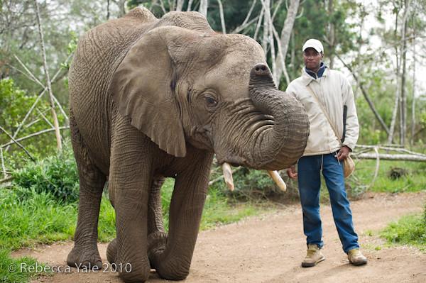 RYALE_Elephant_Sanctuary_4