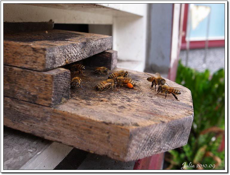蜂采館~ (13)