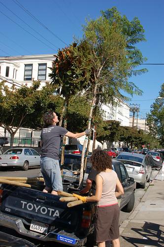 6tree-arrives.jpg