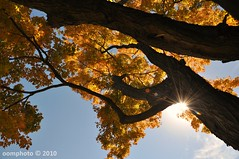 Autumn leaves and sunburst (oomphoto) Tags: autumn tree leaves nikon bluesky autumnleaves sunburst bwpolarizerfilter nikond9018105
