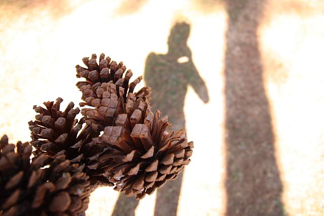 pinecones_me