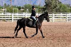 DSC_8662 (netg15) Tags: horses bella andalusian friesian warlander xtexanne