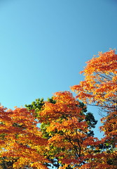 High Park 04 - DSC_6145ED (@ThetaState) Tags: blue autumn trees sky orange toronto ontario canada green fall nature yellow forest gold october highpark 2010 digitalcameraclub nikond300 afsnikkor18200mmeddxvr