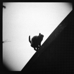 stray... (...storrao...) Tags: blackandwhite bw muro 6x6 film portugal wall museum cat garden ceramic holga lisboa lisbon pb gato filme pretoebranco 120mm holgagraphy selfdeveloped onfilm gp3 week41 museudacidade shanghaigp3 ilfotechc project52 ilfordilfotechc film:iso=100 thecatwhoturnedonandoff storrao sofiatorrão developer:brand=ilford film:brand=shanghai film:name=shanghaigp3100 jardimbordallopinheiro shanghaigp3100asa developer:name=ilfordilfotechc filmdev:recipe=6033 cerâmicanacional gatoassanhado selfscannedwithd90