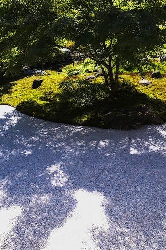庭に木の陰