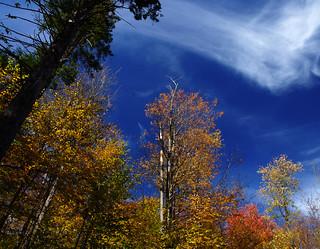 Autumn Leaves Vermont 2010