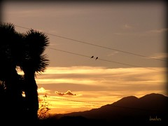 mood swings (dagutzyone ) Tags: sunset sky nature weather clouds view desert scenic joshuatree valley mojave yucca cloudscapes mojavedesert thunderstorms morongo yuccavalley hidesert 92284 dagutzyone