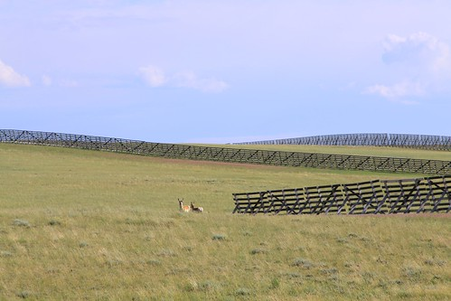 Snow fences, north of Laramie