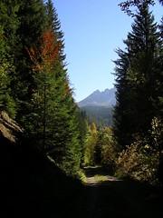 Welschnofen waldweg (makia2007) Tags: dolomiti sdtirol latemar welschnofen novalevante