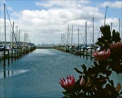 West Park View (Catching Magic) Tags: newzealand marina nikon marine auckland tiraudan protea catchingmagic
