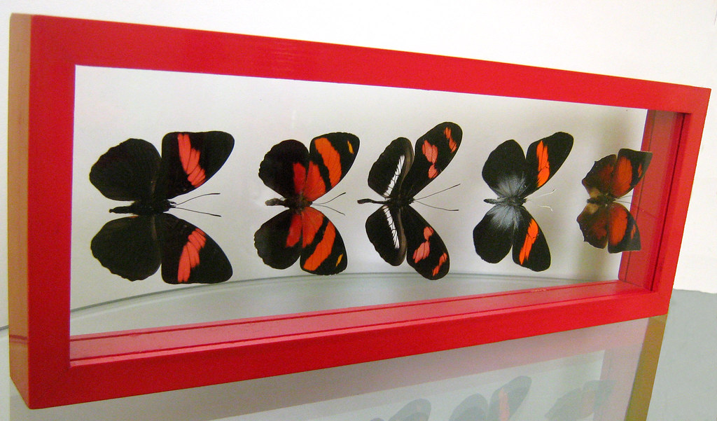 Red Mounted Butterfly Home decorating ideas