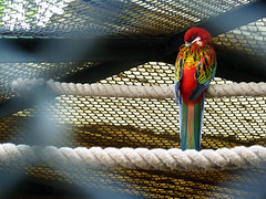 Pjaro (margolove) Tags: chile santiago bird zoo parrot rope tropical zoolgico pjaro suramerica soga