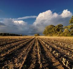 Vanishing corn (momono) Tags: sunset sky holland nature clouds vanishingpoint corn cornfield nikond90 tokinaaf1224mmf4 momono vertorama momonofotografie martijnschornagel