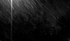 """fluffy hail"" (phool 4  XC) Tags: autumn trees bw snow toronto canada night seasons grain signsoftheseasons بيتربروباخر phool4xc"