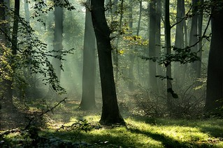 Light and trees....