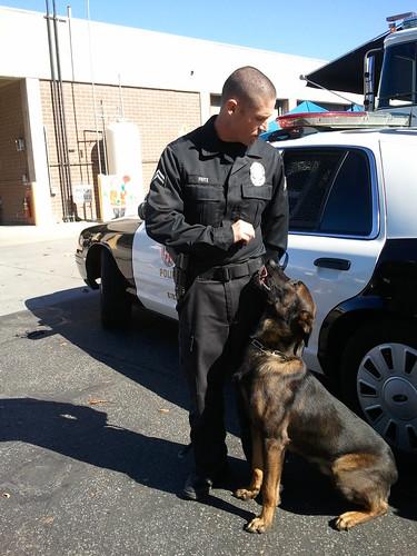 Police K9 Suspect Apprehension Dog