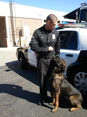 Police K9 Suspect Apprehension Dog