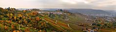 Fall in the Vineyard IV (flofler) Tags: autumn panorama fall vineyard nikon colorful wine stuttgart pano autumncolors nikkor 1870mm untertrkheim nikond300