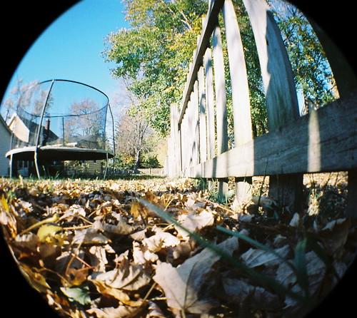 45/52: backyard leaves