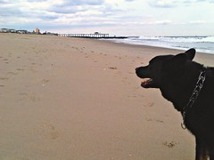 Life's a beach (nosha) Tags: phone blackberry email nosha mostlikelymycellphone