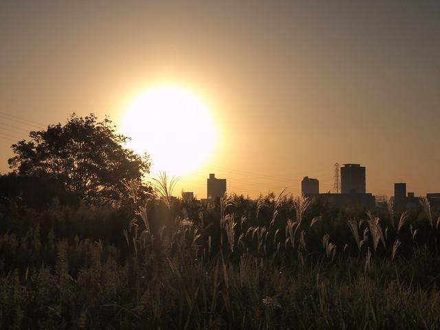 Silver grass & Sun