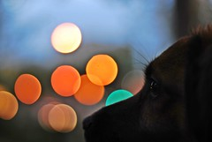 After hours (thisisforlovers) Tags: dog 50mm colours bokeh