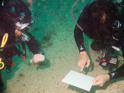 Ernst timing me for Deep Diver certification exercise
