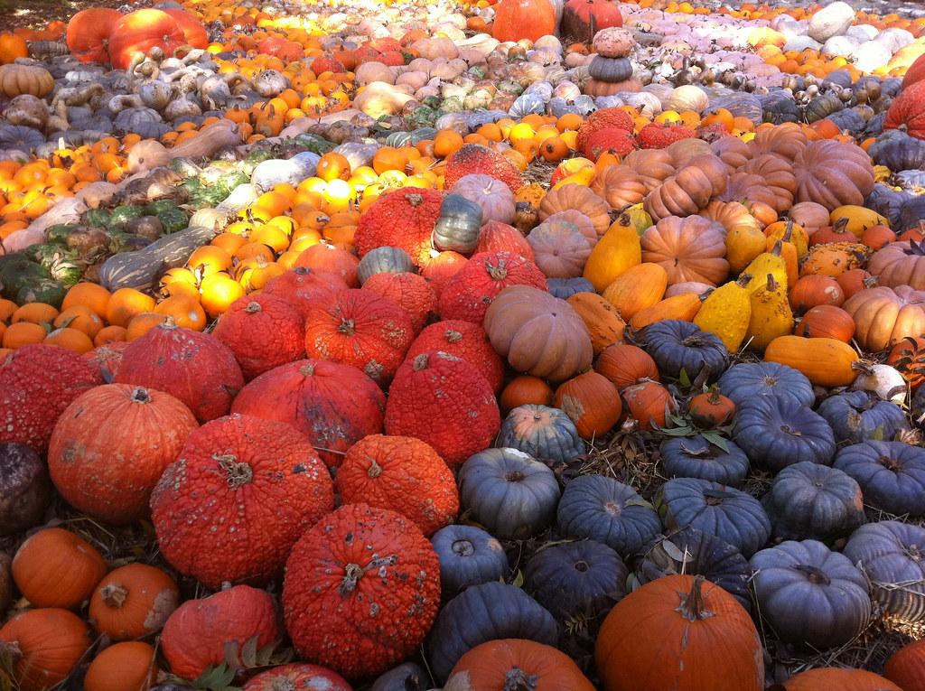 biggest pumpkin patch in the usa