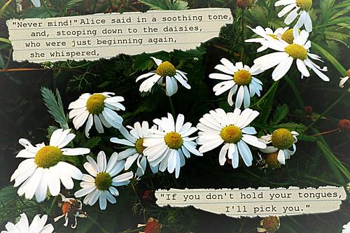Alice Daisies