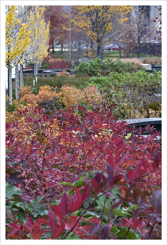 Citygarden Autumn Foliage 2