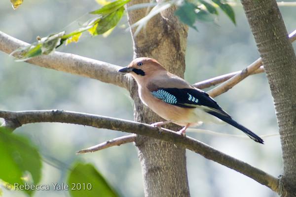 RYALE_Shaanxi_Birds_3