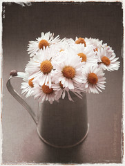 Texture love  (B@rbar@ (Barbara Palmisano)) Tags: life flowers orange white flower texture blog still little sweet snail daisy romantic fiori fiore bianco vaso ohhh arancione chiocciola margherite httpbarbaraphotographyblogspotcom