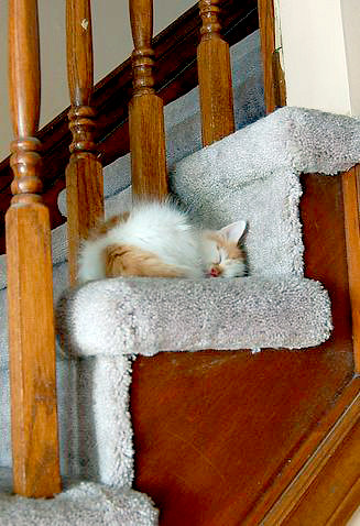cute kitten sleeping on stairs